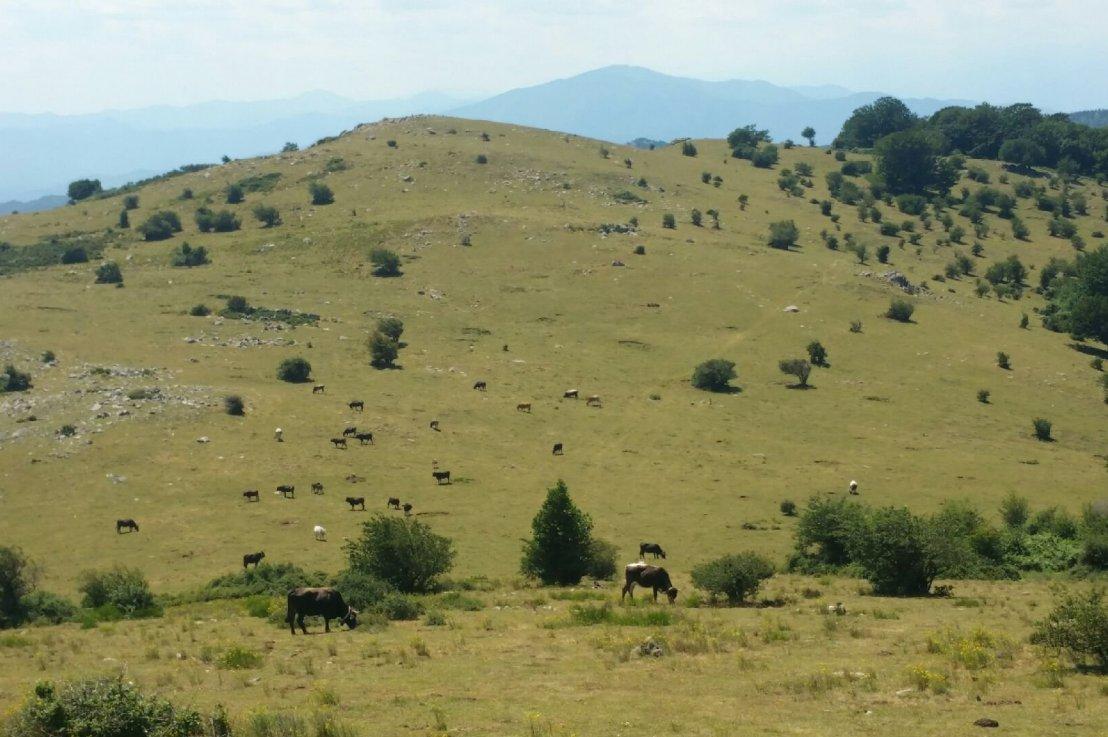 J+2 De Banyuls au col de l'Ouillat(22km)